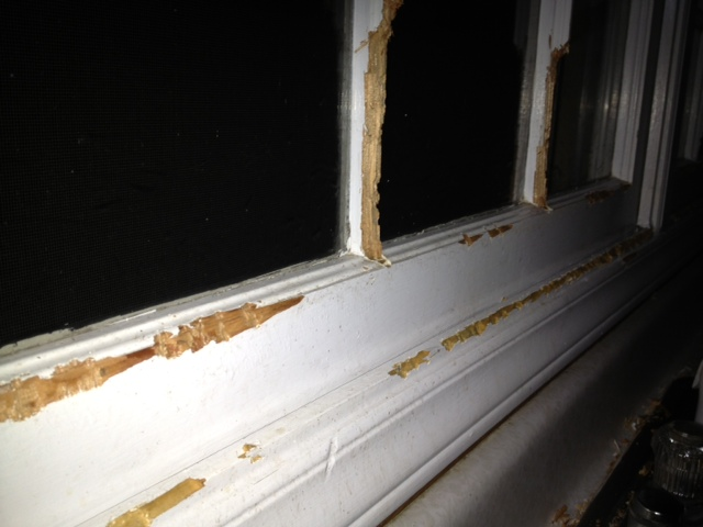 Window Damage from Squirrel Inside Home