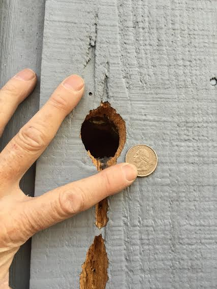 Quarter-sized Hole in Wall Used by Flying Squirrels to Access Home